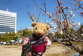 梅の花 (西の丸広場) ベァー