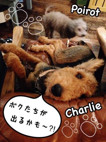 blog_151203poirotcharlie_convert_20151204000011.jpg