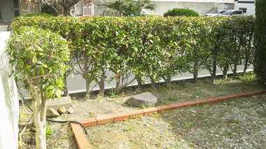 groupyaeshigashi-1.jpg