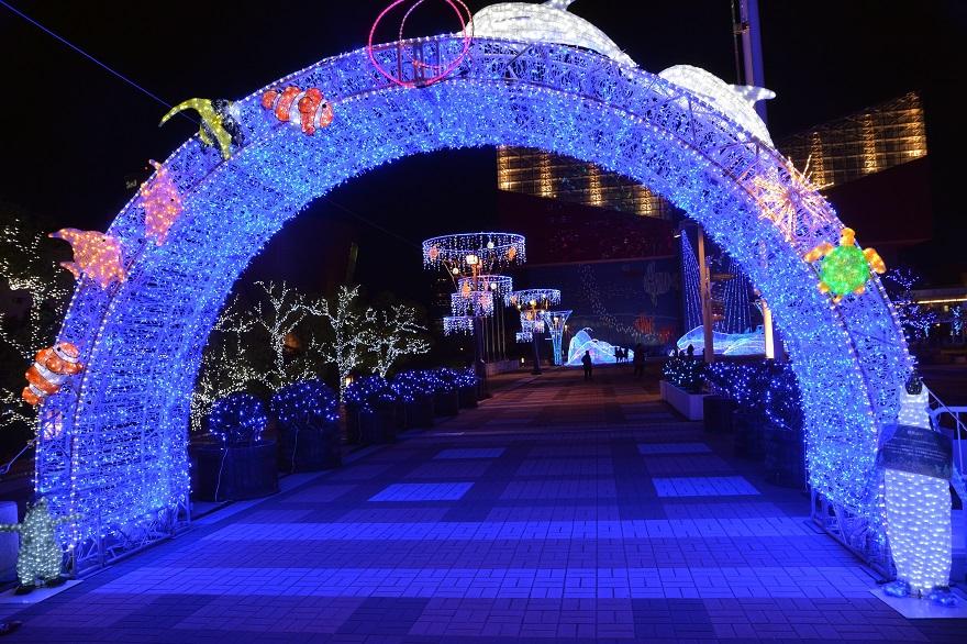 海遊館・ウィンターイルミネーション (5)