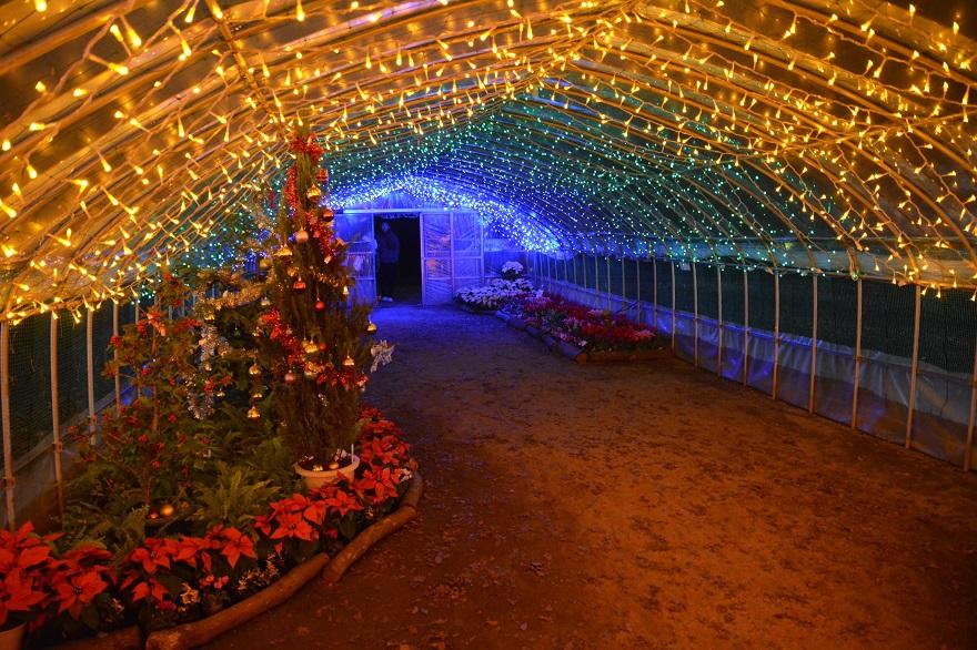 長居植物園ガーデンイルミネーション (5)
