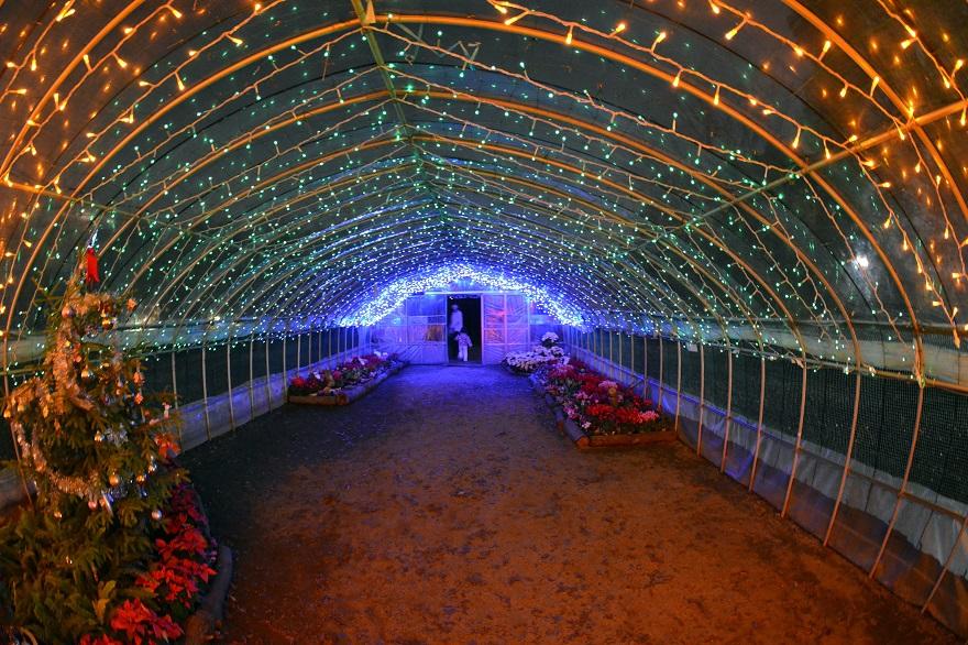 長居植物園ガーデンイルミネーション (9)
