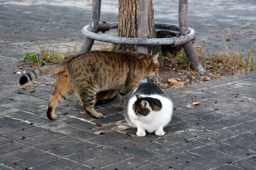 自由な猫達 (2)