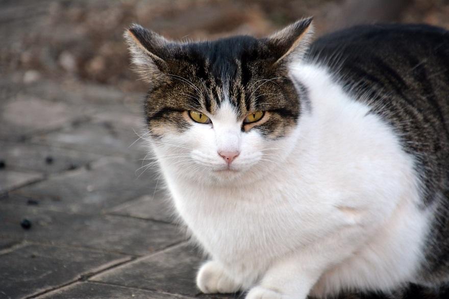 自由な猫達 (3)