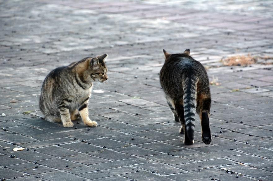 自由な猫達 (4)