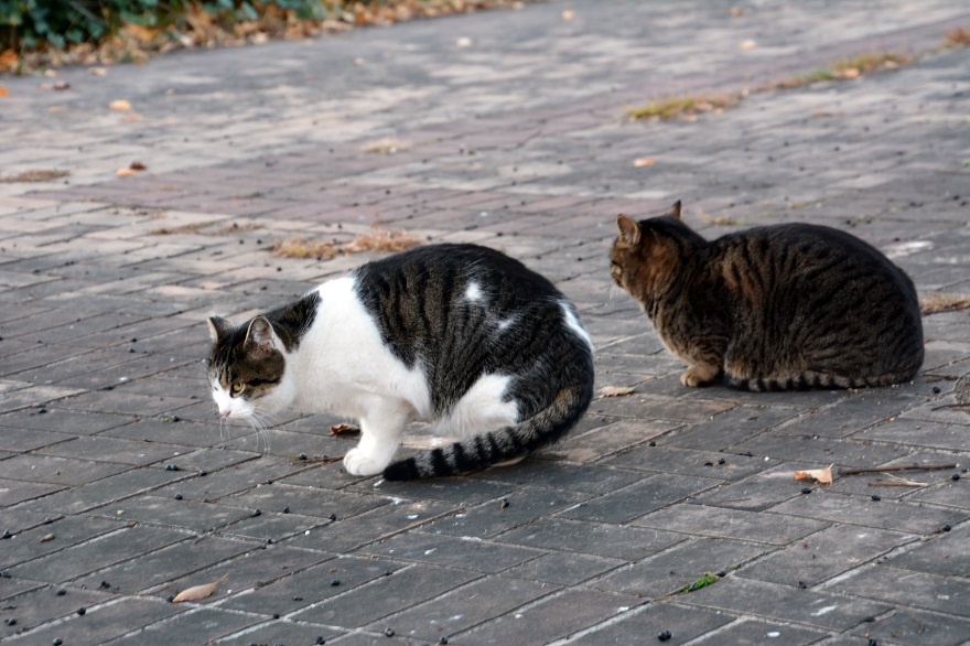 自由な猫達 (5)