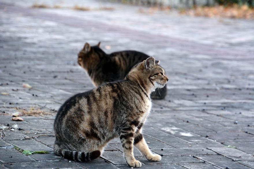 自由な猫達 (6)