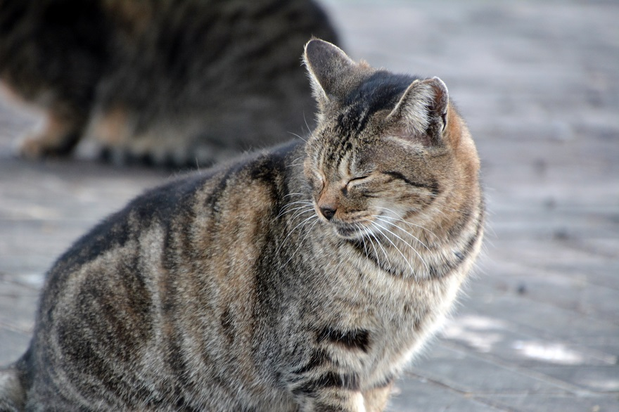自由な猫達 (7)