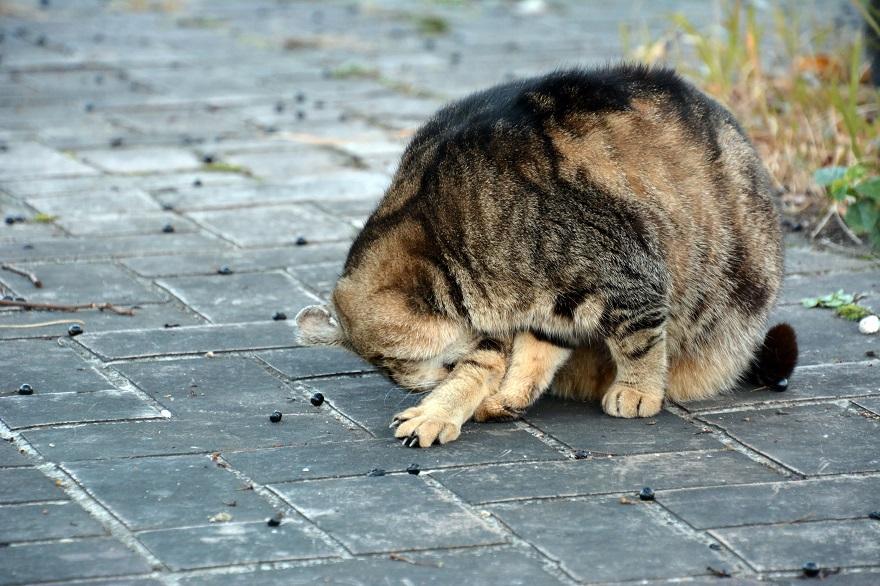 自由な猫達 (8)