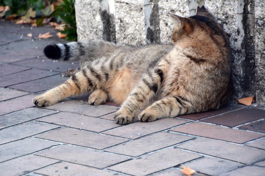 自由な猫達 (10)