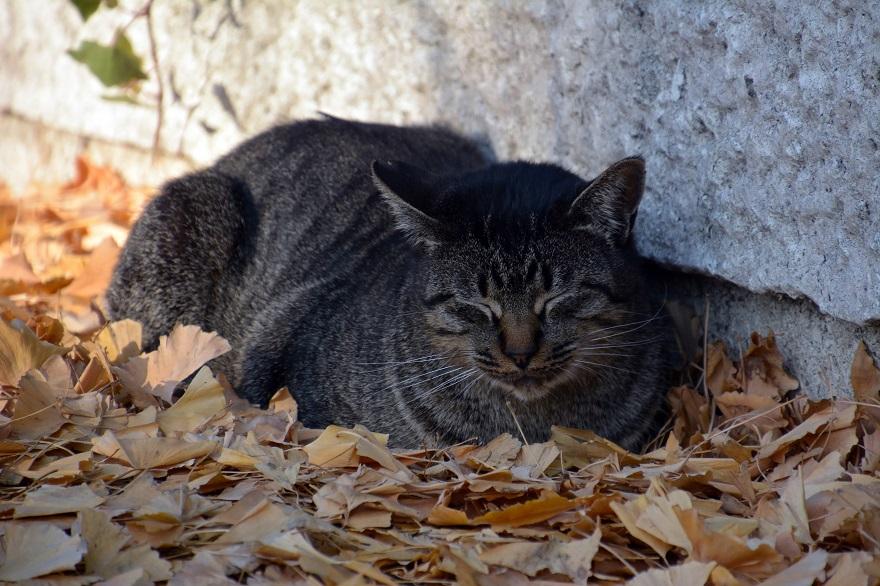 自由な猫達 (11)