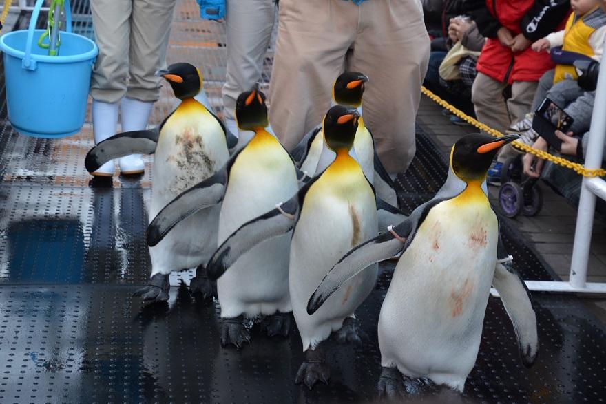 ペンギンパレード(1)