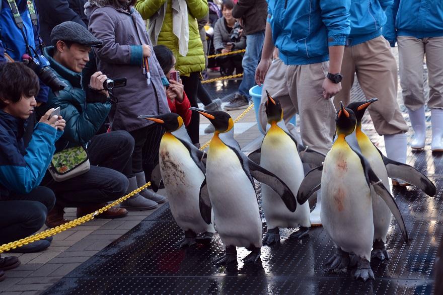 ペンギンパレード(3)