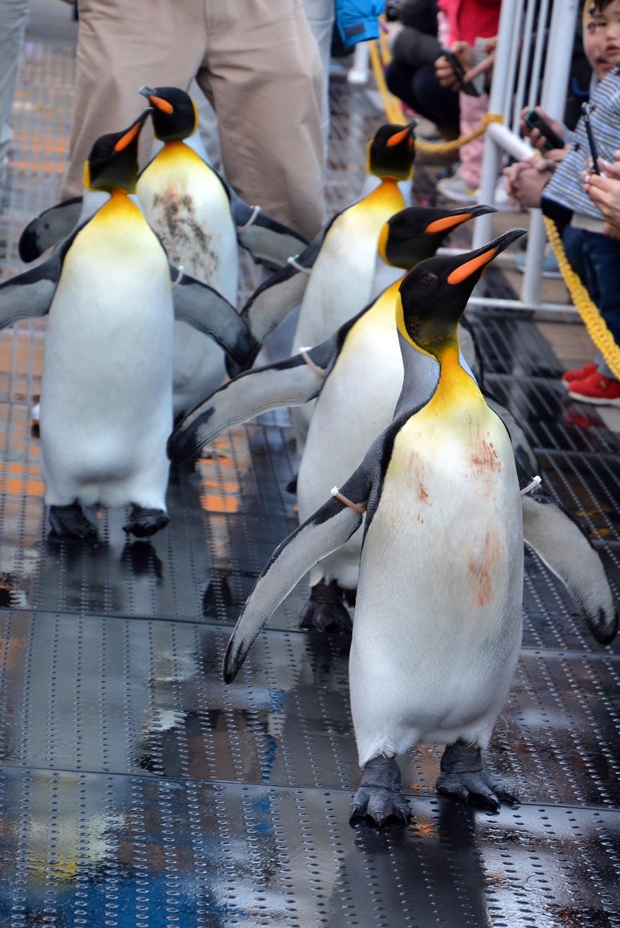 ペンギンパレード(4)