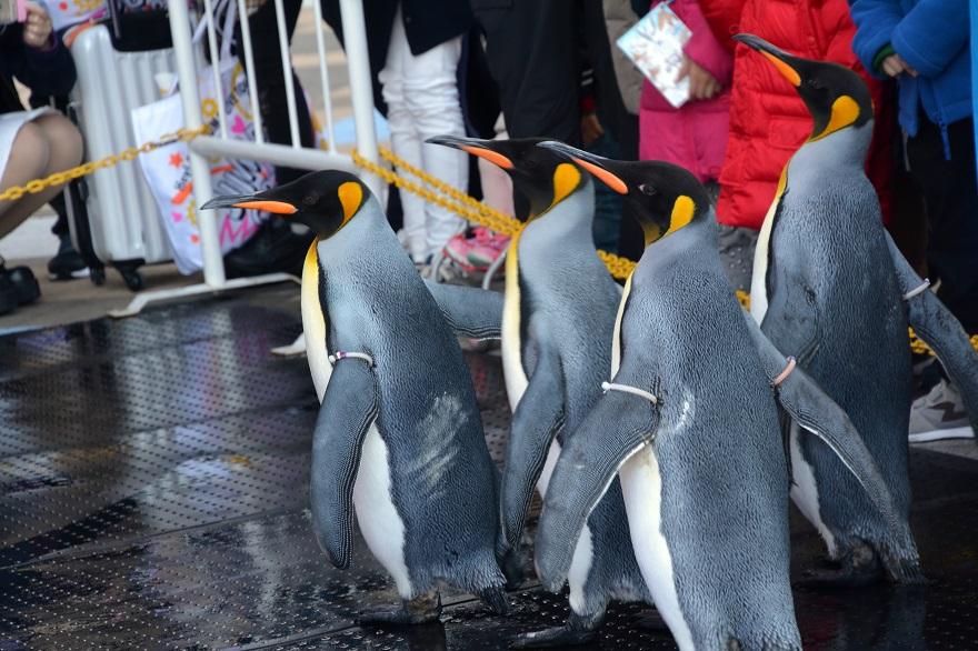 ペンギンパレード(5)