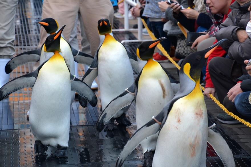ペンギンパレード(6)