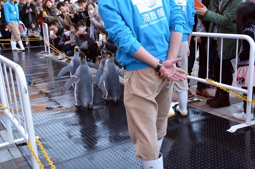 ペンギンパレード(8)