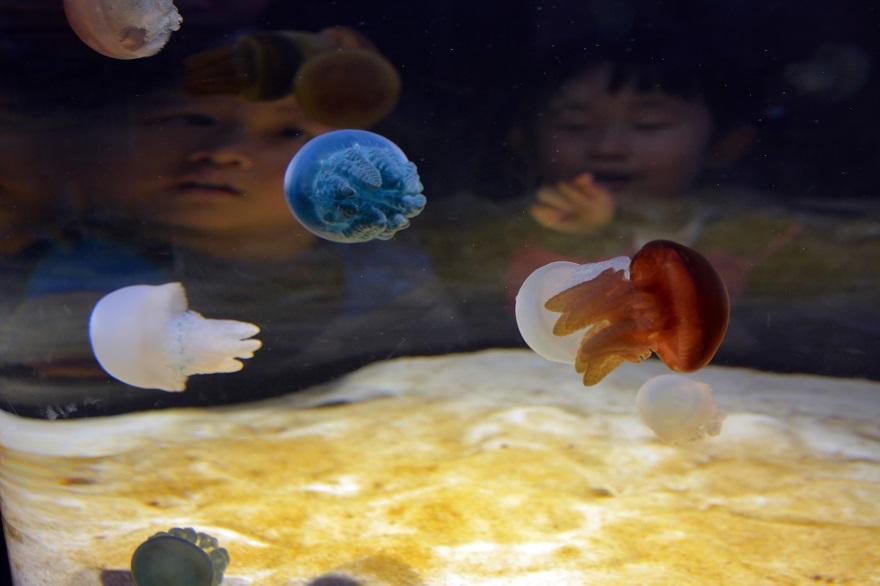 水族館ニフレル (7)