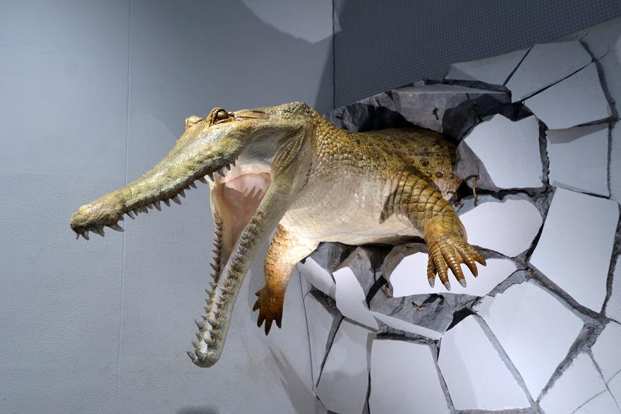 水族館ニフレル (11)