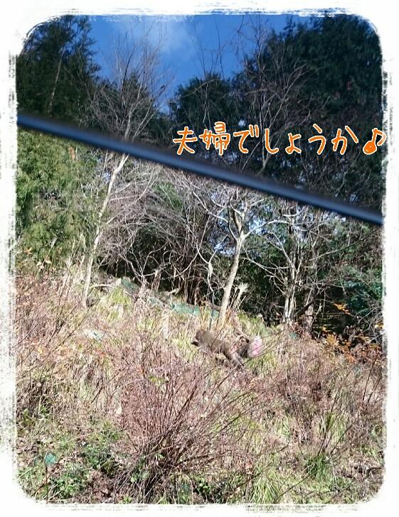 20160111102049338.jpg