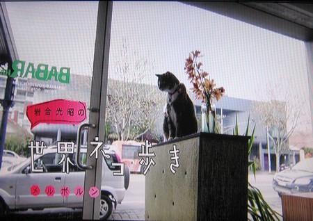 岩合光昭の世界ネコ歩き「メルボルン」