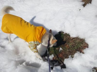 雪の散歩 (3)
