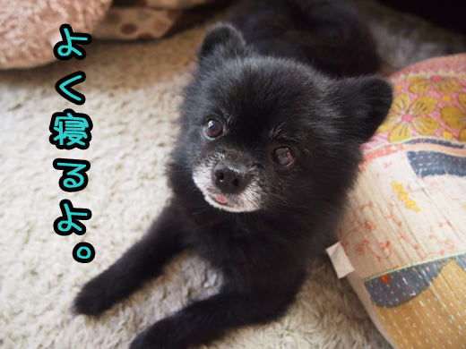 youneruyotoakireru.jpg