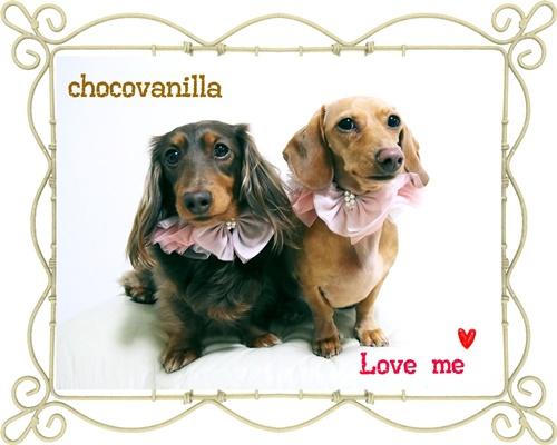 ショコラとバニラのバレンタイン