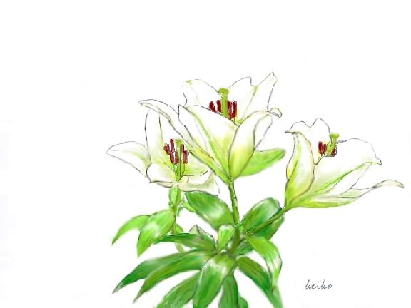 lily1-siro-b.jpg