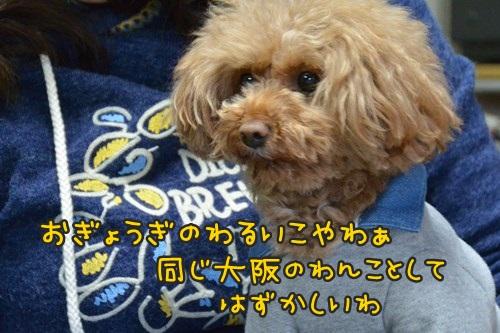 RDSC_0479_Y.jpg