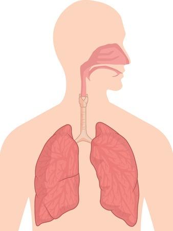 呼吸とエッセンシャルオイル