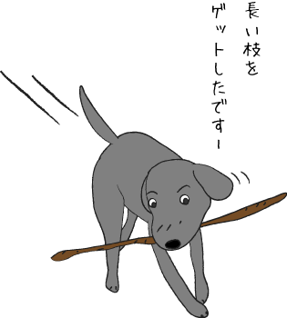 木の枝を持ってくる犬