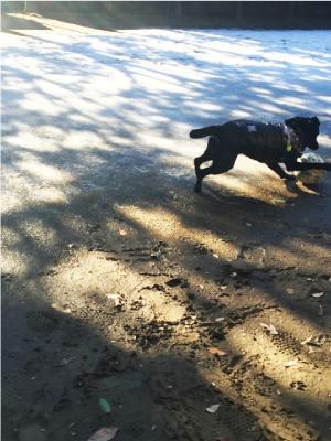 ボールで遊ぶ犬01