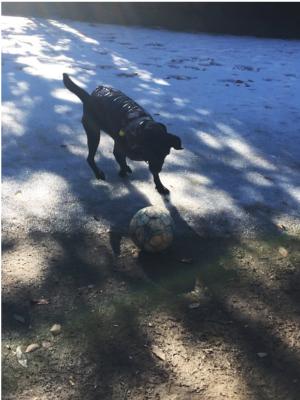 ボールで遊ぶ犬02