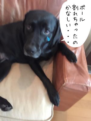 ガッカリする犬