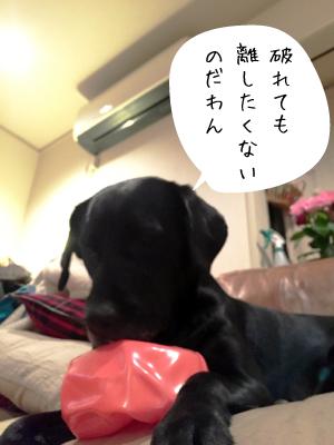 ボールと犬01