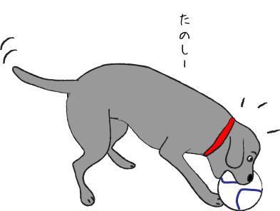 ボールあそびする犬