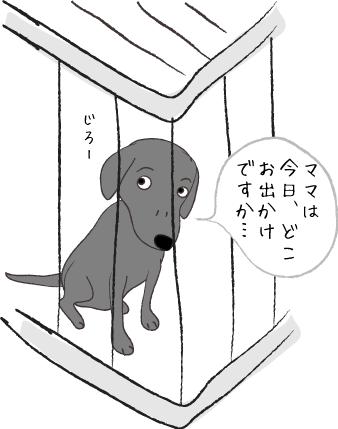 じっと見る犬