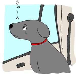 車の中でなく犬