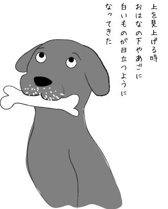 白い毛がめだつ犬