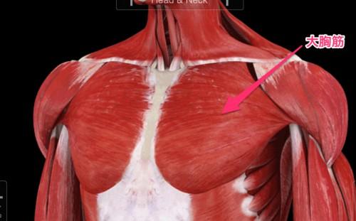 Muscle_System_Pro_III-e1402578223659.jpg