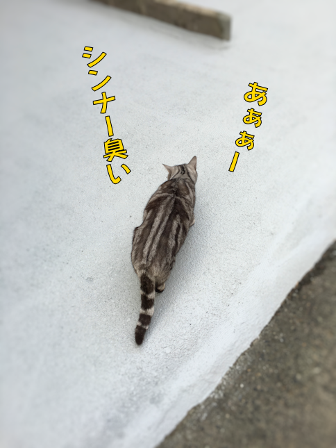 2016020315325127c.png