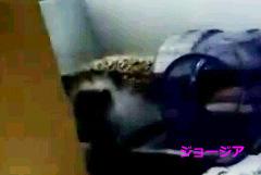 XiaoYing_Video_1447405822901_pict_2_2.jpg