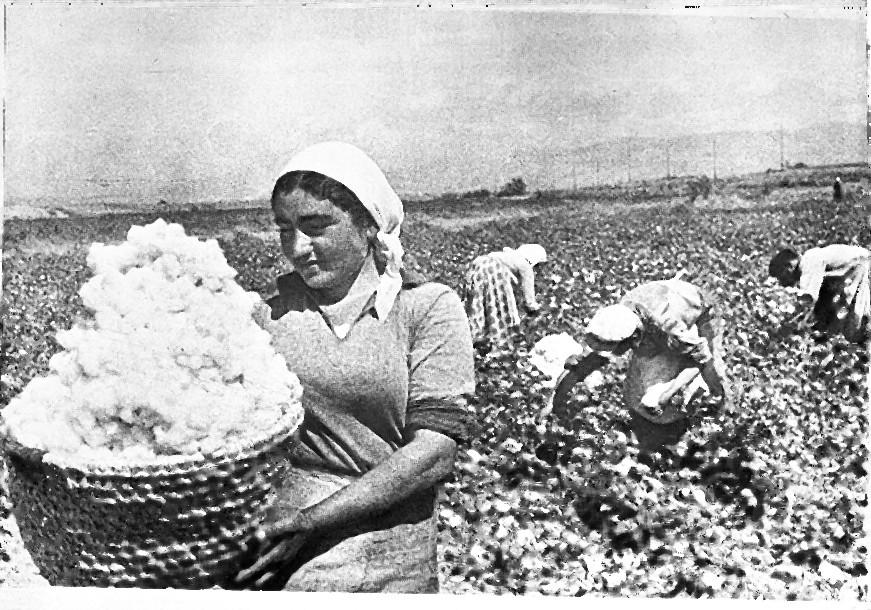 Armenian_cotton.jpg