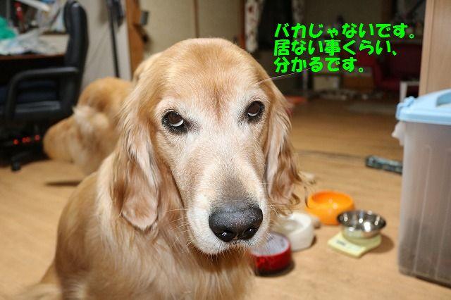 IMG_5290.jpg