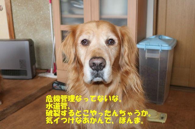 IMG_6171.jpg