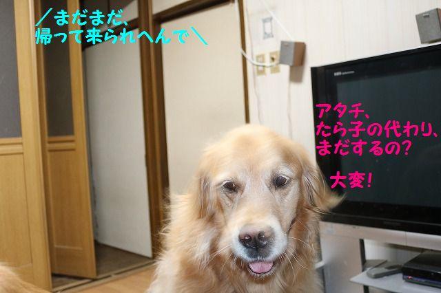 IMG_7181.jpg