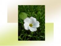 11白小花
