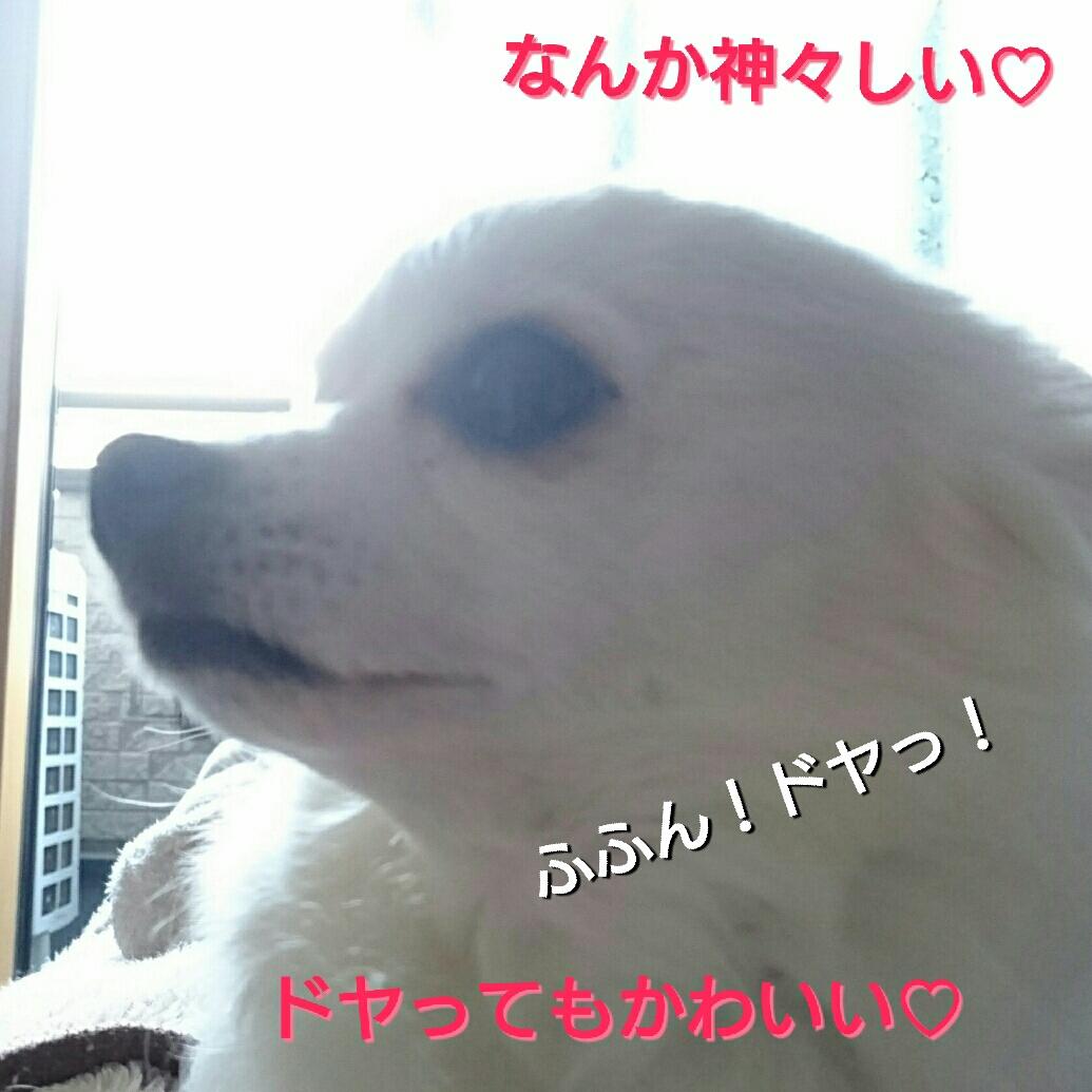20160122105136b3d.jpg