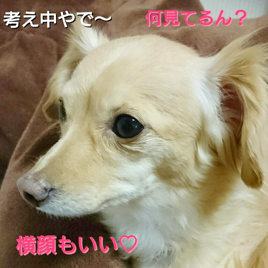 20160122114349064.jpg